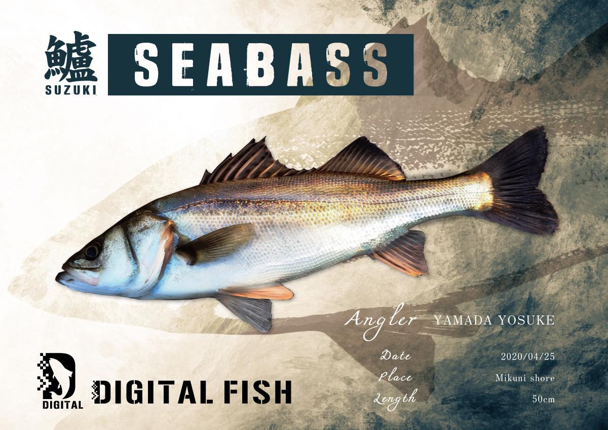 シーバスデジタル魚拓