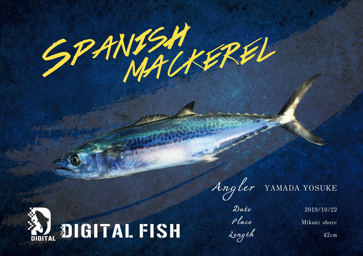 サゴシデジタル魚拓