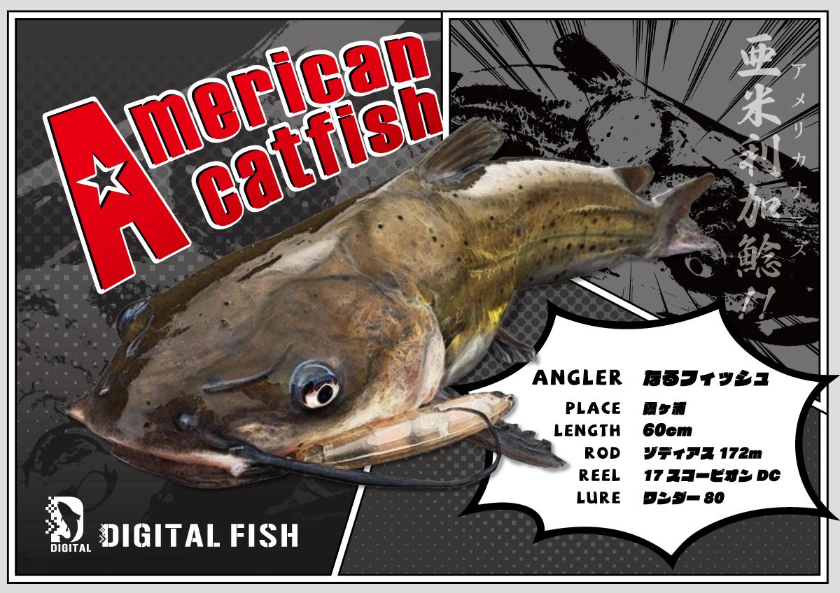 アメリカナマズデジタル魚拓