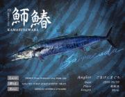本日のお魚は「バラクーダ」!!