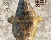 珍しい構図の写真をデジタル魚拓に