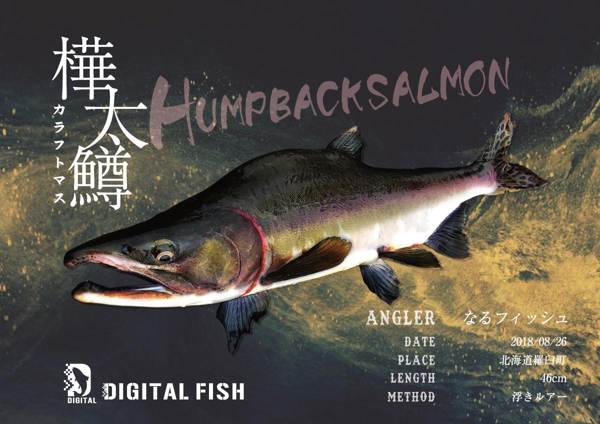 カラフトマスデジタル魚拓