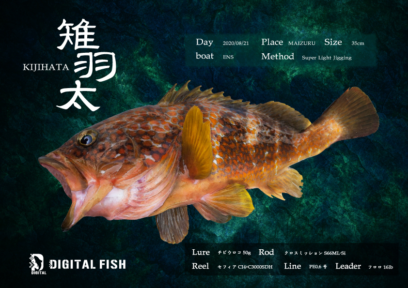 キジハタデジタル魚拓